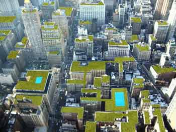 New York Green Roof Installer Costs   ECO BROOKLYN