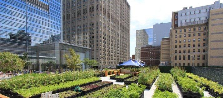 urban micro farm